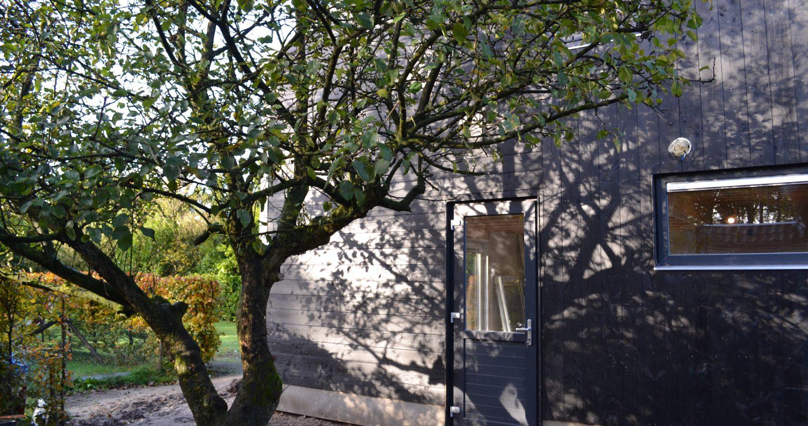De zijkant van de houtschuur met de appelboom.
